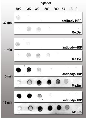 Avidin-Nucleic-Acids-Nano-Assembled-System-ANANAS-Gentaur-ELISA